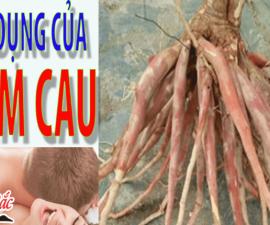 Sâm Cau